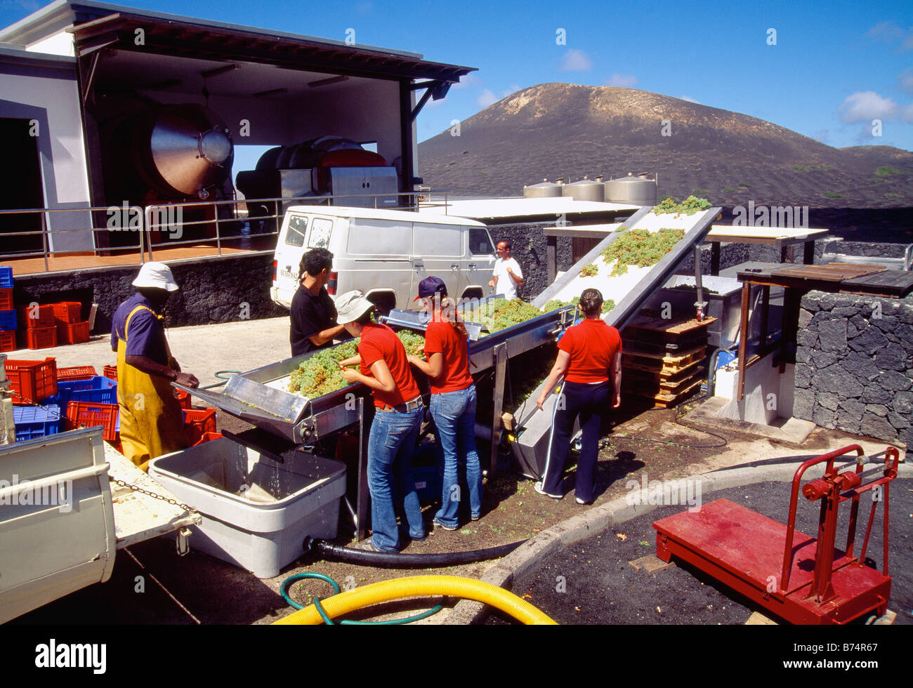 Grape pickers in La Geria. Lanzarote island. Canary Islands. Spain. - Stock Image