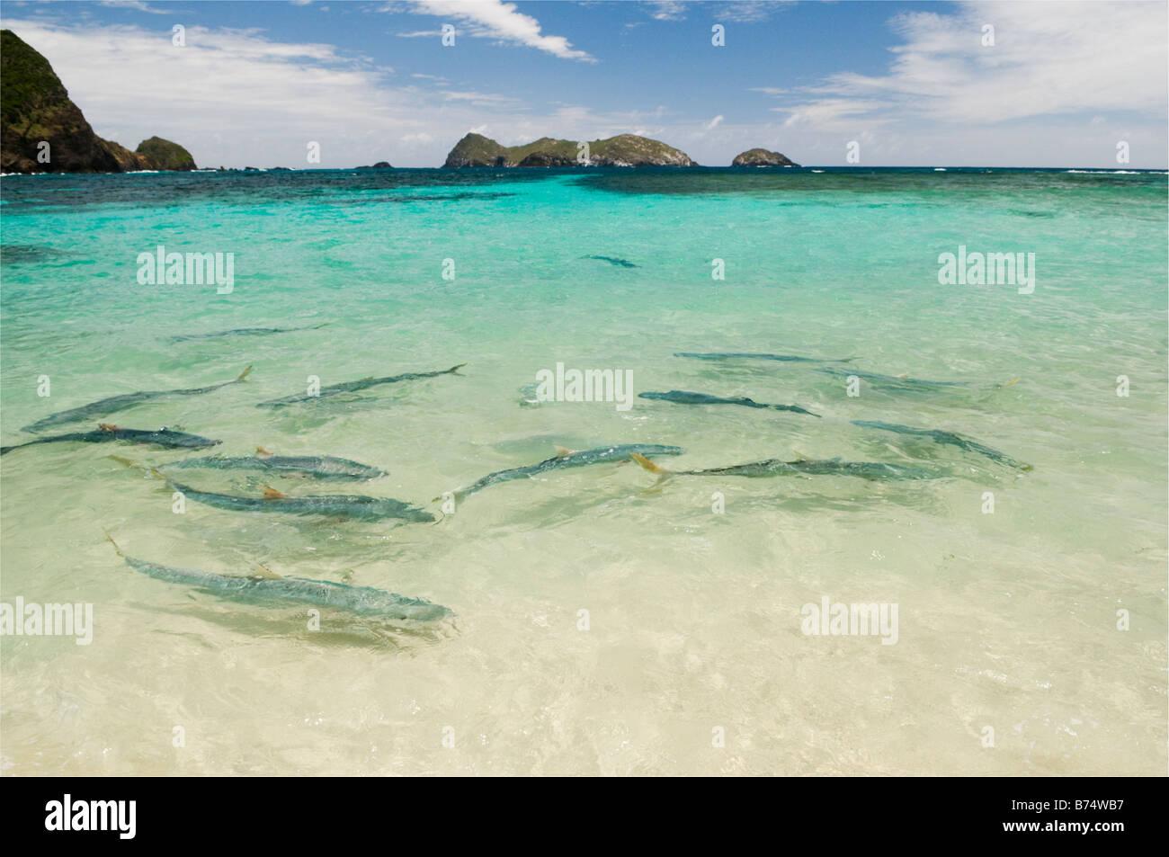Neds Beach Lord Howe Island Australia
