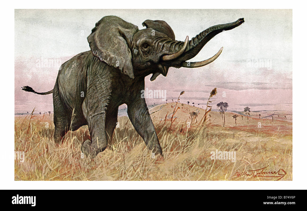 illustration of a charging african elephant Stock Photo