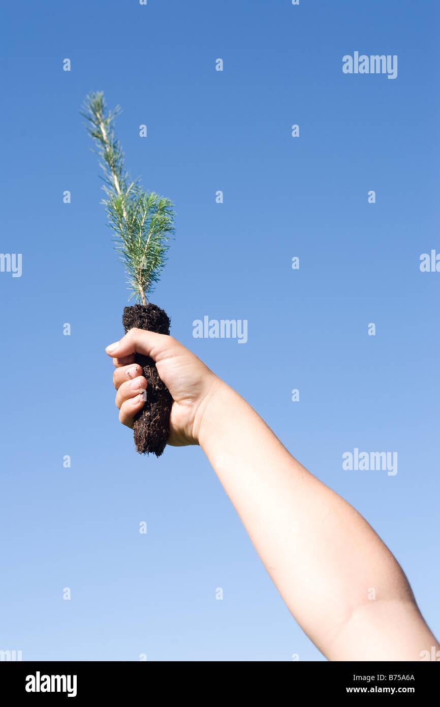 Hand holding up tree seedling, Winnipeg, Manitoba, Canada - Stock Image