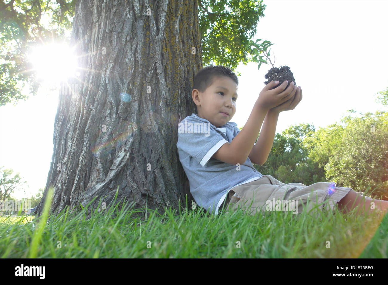 Six year old boy holds small tree, seated beside large tree, Winnipeg, Canada - Stock Image