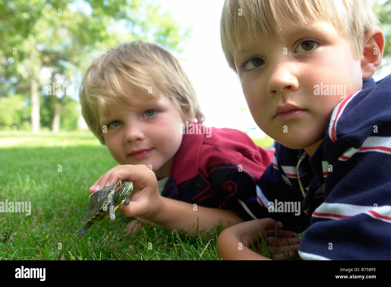 Four and six year old brothers holding turtle, Winnipeg, Canada - Stock Image