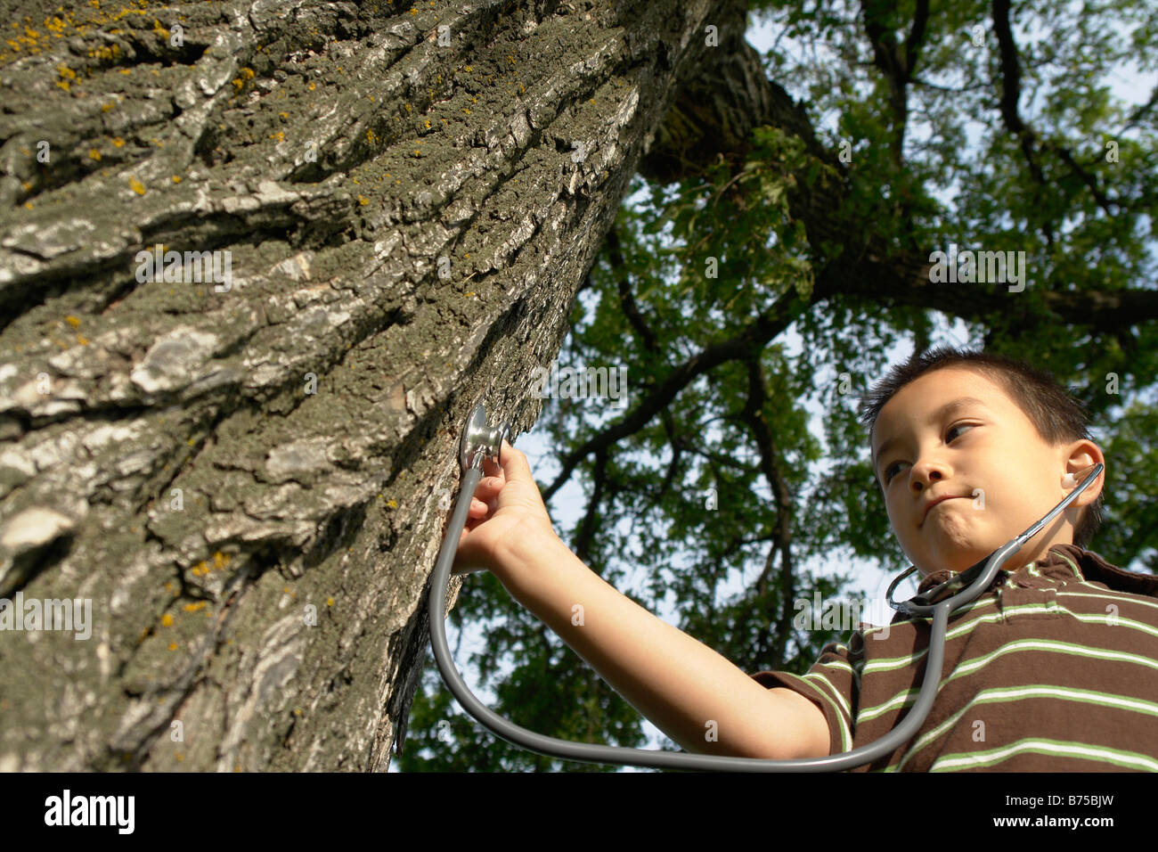 Seven year old boy with stethescope placed on tree, Winnipeg, Canada Stock Photo