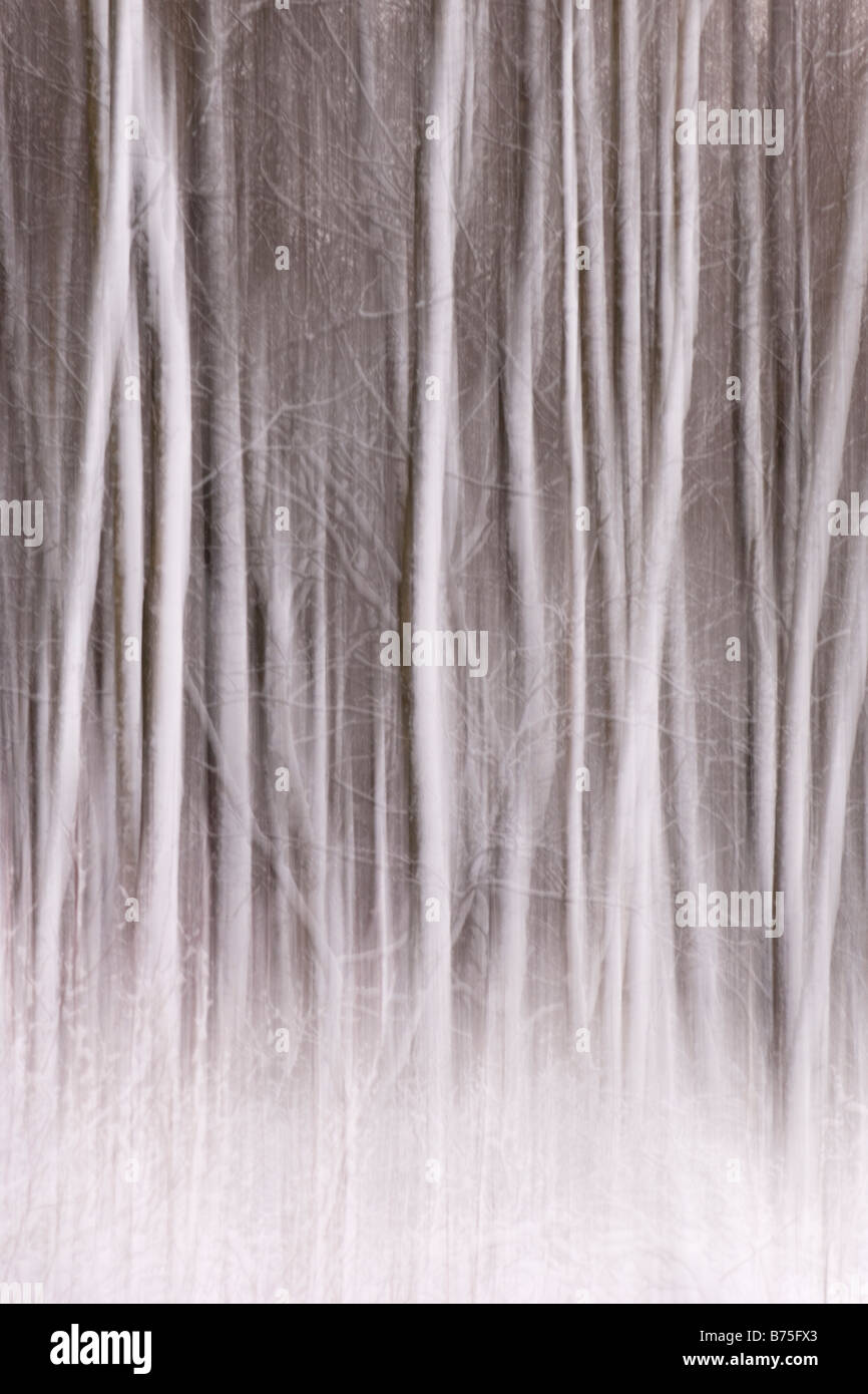 trees in the snow abstract tree Stock Photo
