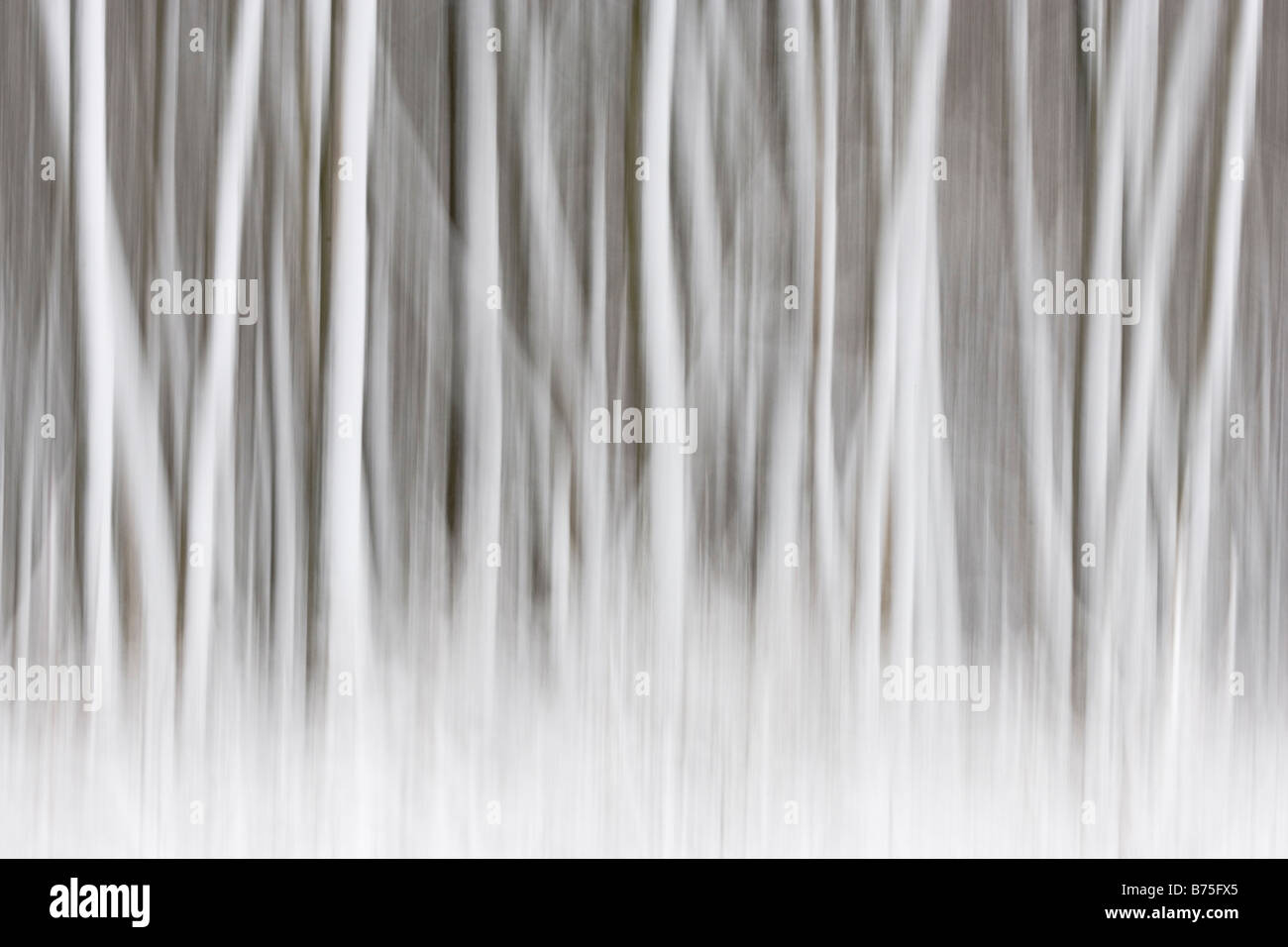 trees in the snow snowfall abstract tree Stock Photo