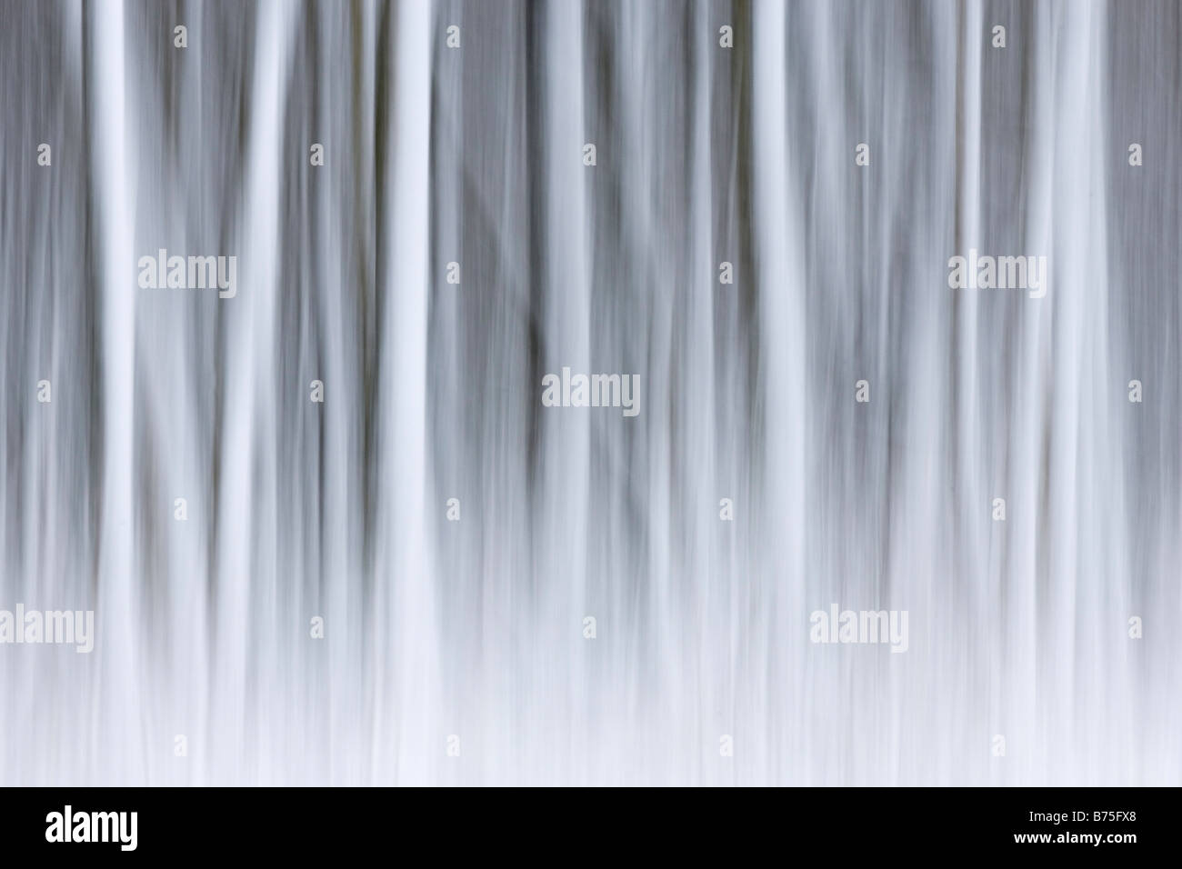 trees in the snow    blowing snow  abstract Stock Photo