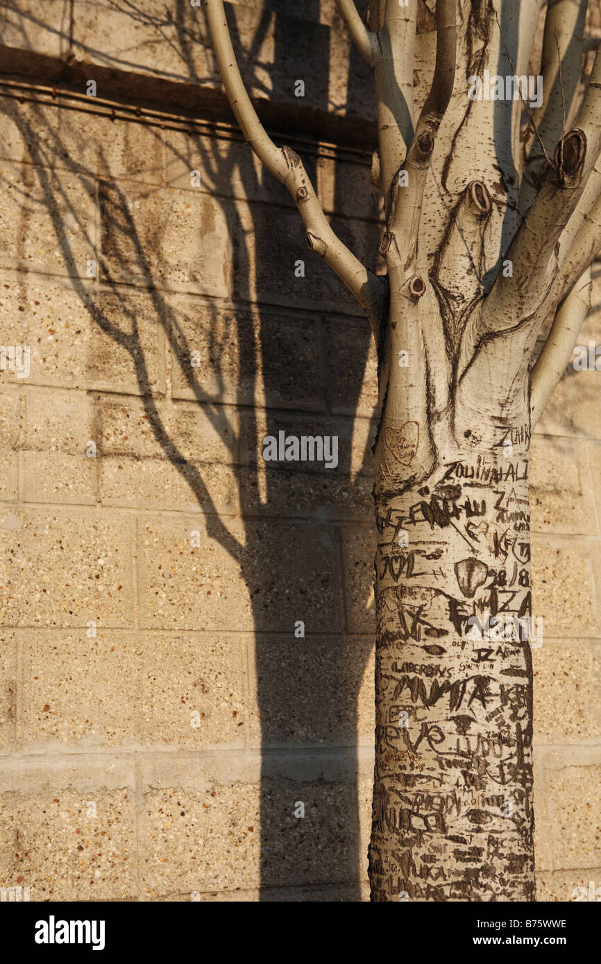 Graffiti covered tree with shadow, Paris, France, Europe - Stock Image