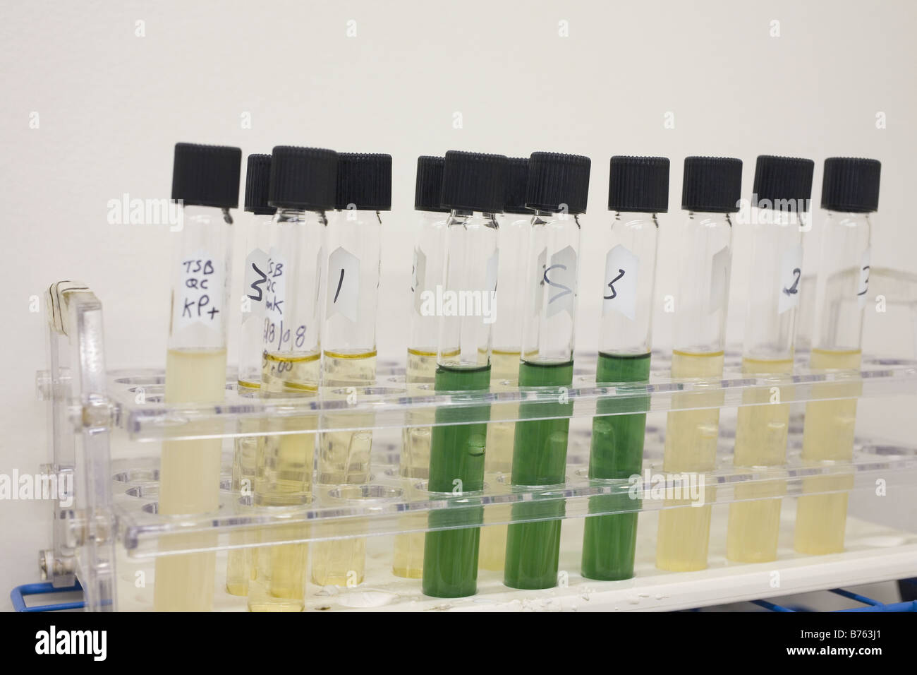 Test for coliform group bacteria referred to as Multiple-tube Fermentation Technique - Stock Image