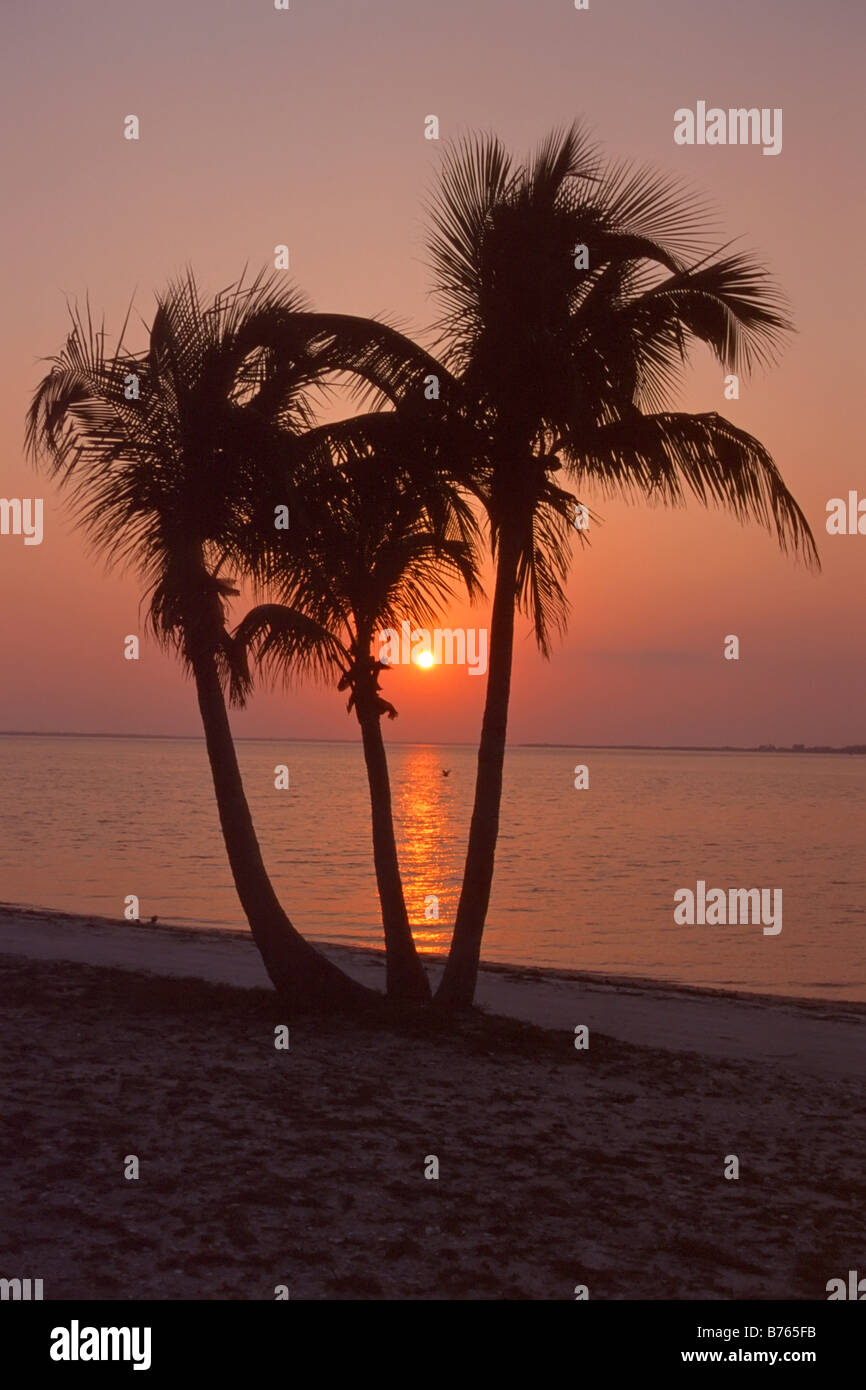 palm tree beach red sunset backlight sillhouette florida america usa - Stock Image