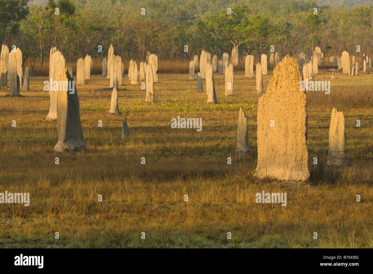 Magnetic termite (Amitermes meridionalis & A. laurensis) mounds North of Lichfield N.P. Northern Territory Australia - Stock Image