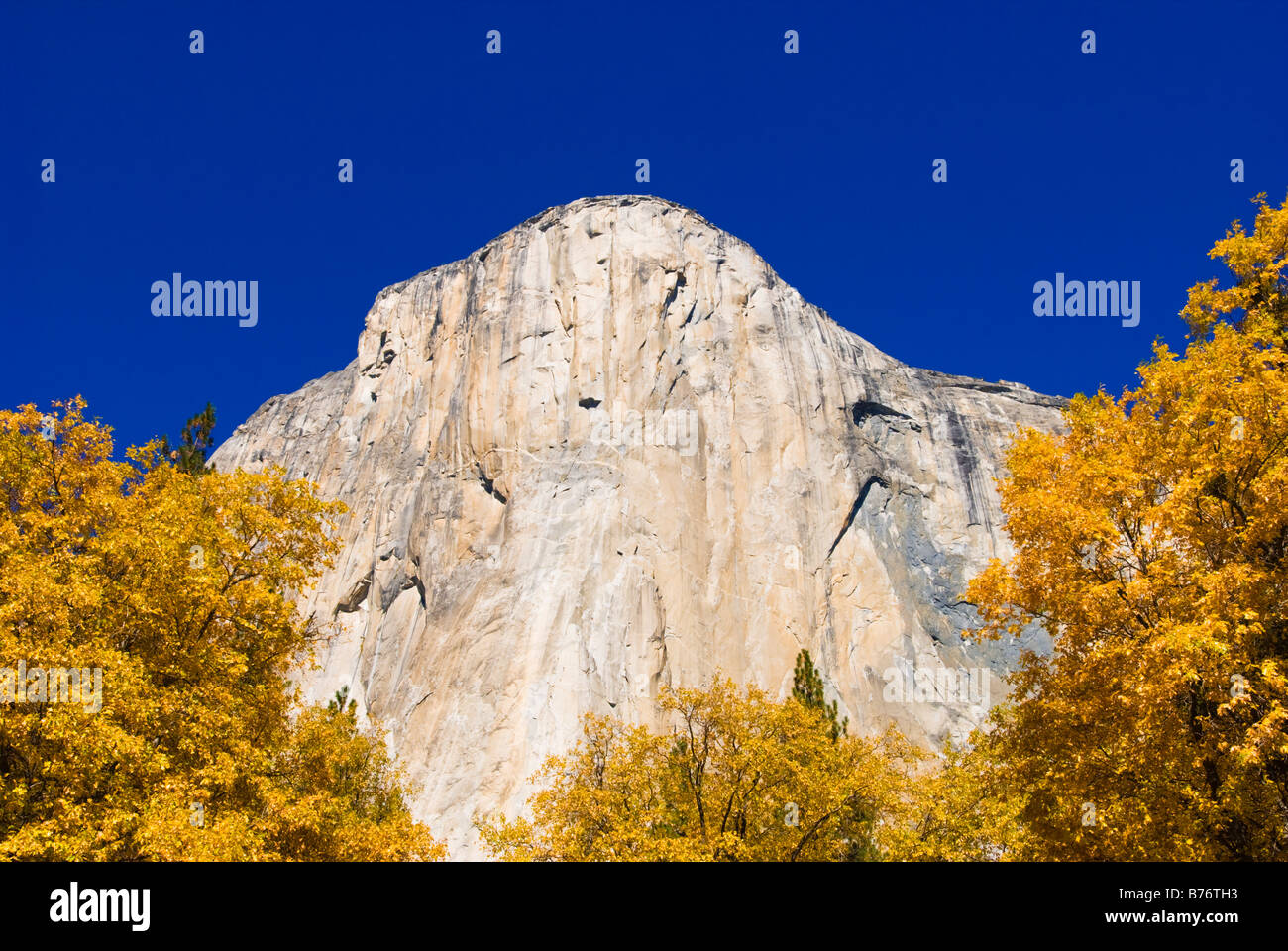 Fall color under El Capitan Yosemite Valley Yosemite National Park California Stock Photo