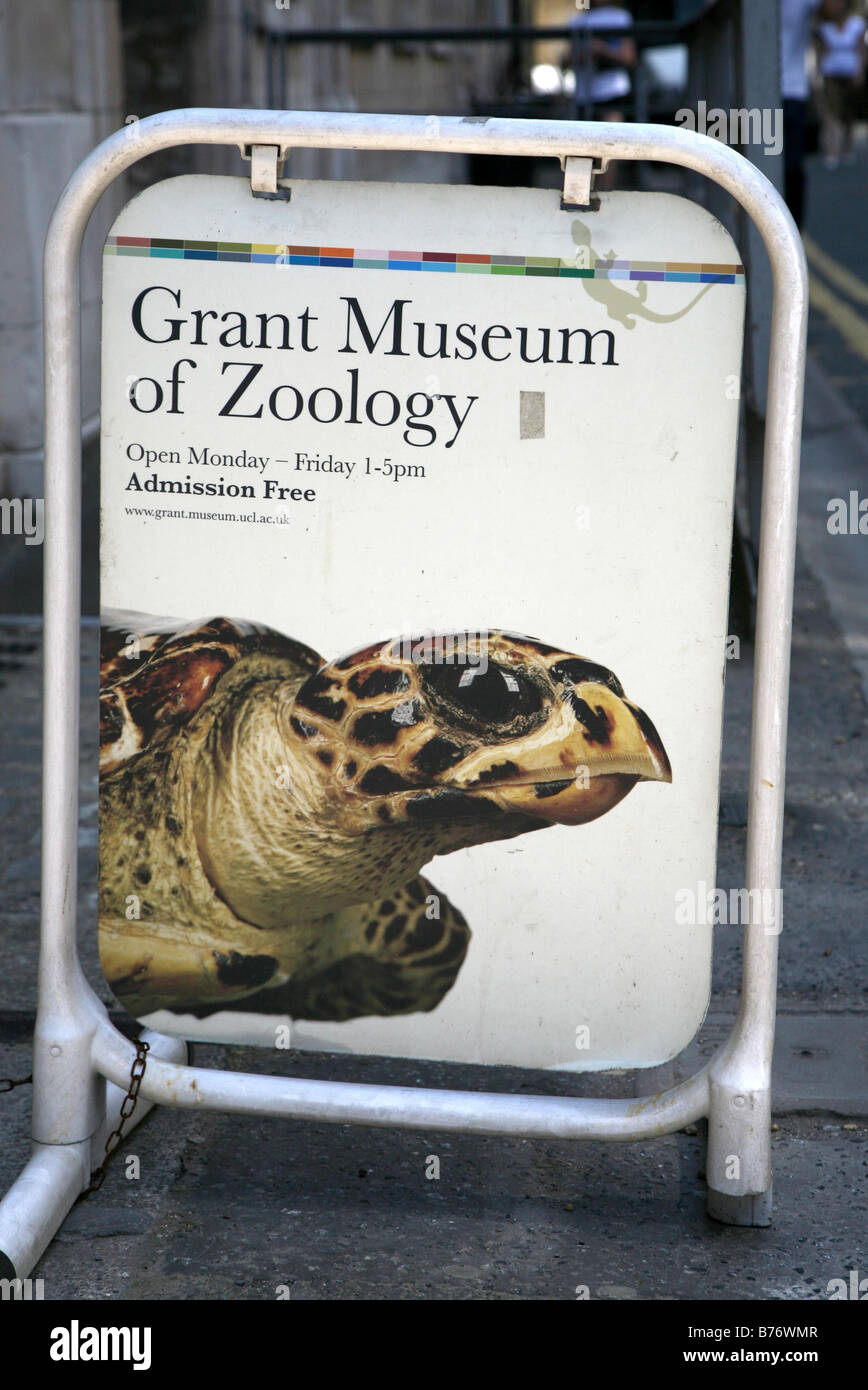 General View GV of Grant Museum of Zoology in London England UK - Stock Image