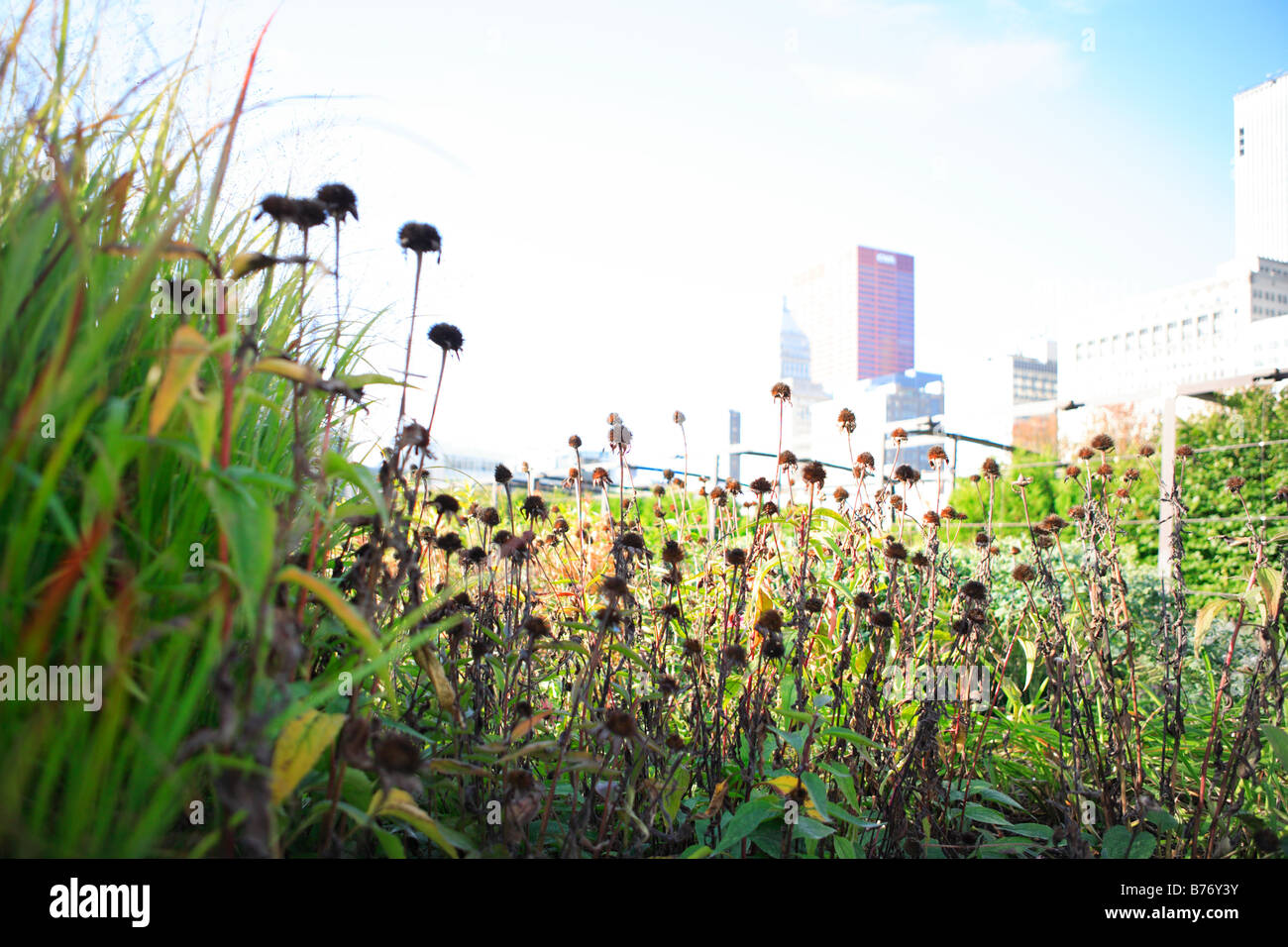 PRAIRIE STYLE LURIE GARDEN IN MILLENIUM PARK IN DOWNTOWN CHICAGO ILLLINOIS USA - Stock Image