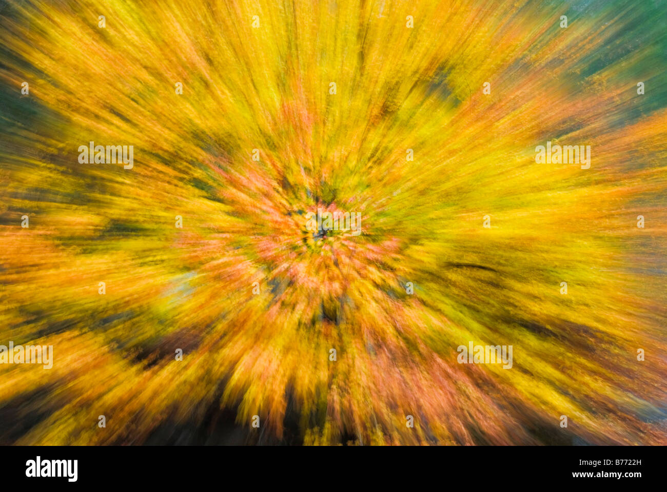 Fall color zoom Yosemite Valley Yosemite National Park California - Stock Image
