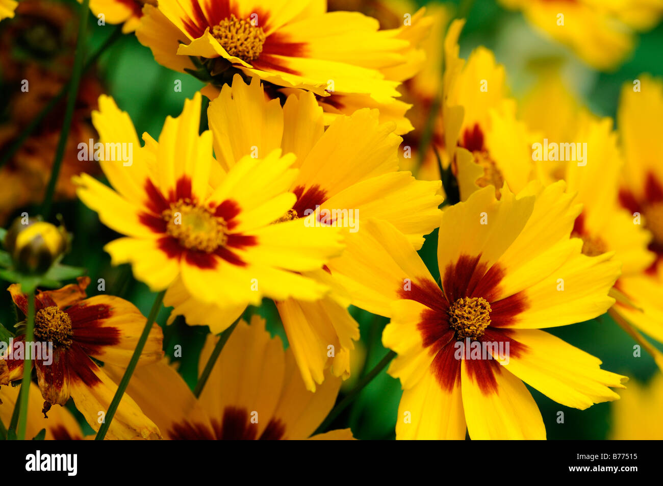 Yellow Red Centre Stock Photos Yellow Red Centre Stock Images Alamy