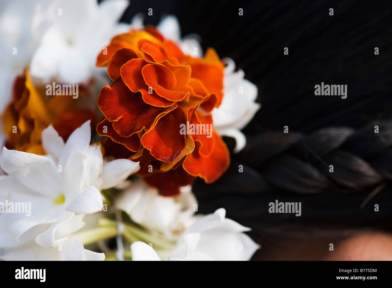 India jasmine hair stock photos india jasmine hair stock images marigold and jasmine flowers in an indian girls hair close up andhra pradesh india izmirmasajfo