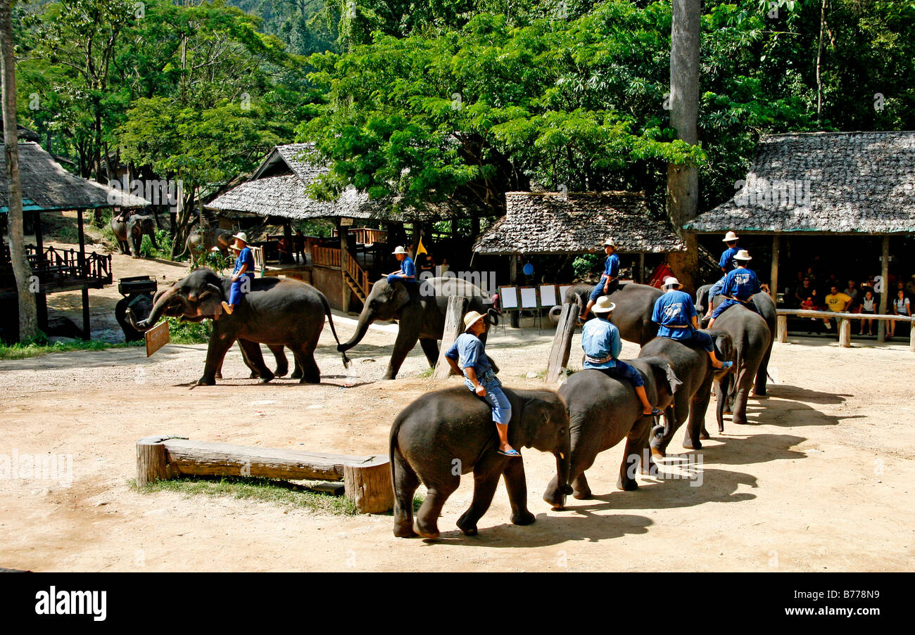 Elephant show, elephant farm, Mae Sa Valley, jungle, near Chiang Mai, Thailand, Asia Stock Photo