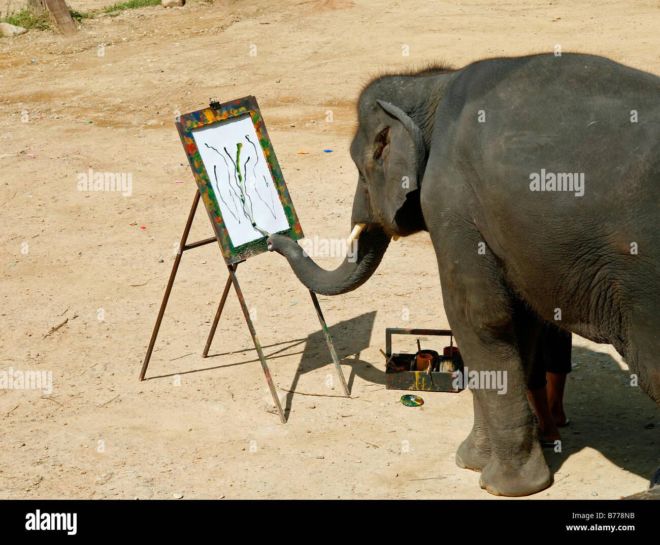 Elephant painting, elephant farm, Mae Sa Valley, jungle, near Chiang Mai, Thailand, Asia - Stock Image