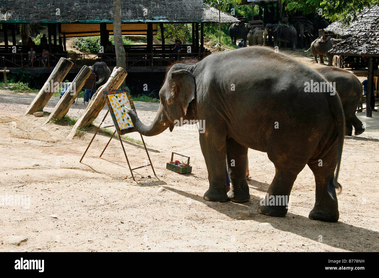 Elephant painting, elephant farm, Mae Sa Valley, jungle, near Chiang Mai, Thailand, Asia Stock Photo