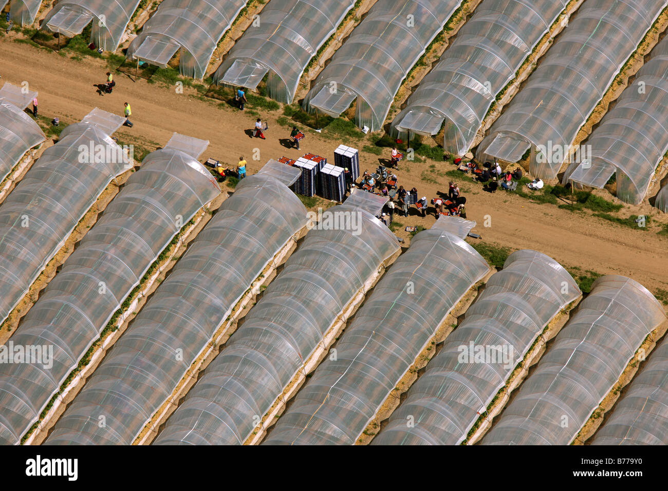 Aerial picture, strawberry greenhouses, Wesseling, North Rhine-Westphalia, Germany, Europe - Stock Image