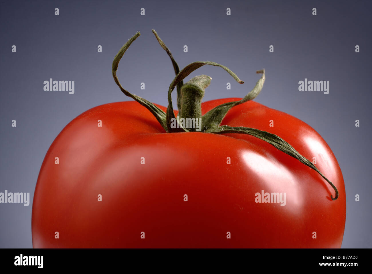 Tomato detail Vegetables tomato red bitter cucumber Lycopersicon esculentum solanum healthy rich in vitamins low - Stock Image