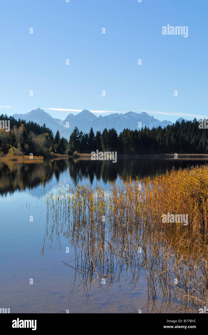 Hegratsrieder See, lake, near Buching, Allgaeu, Bavaria, Germany, Europe Stock Photo