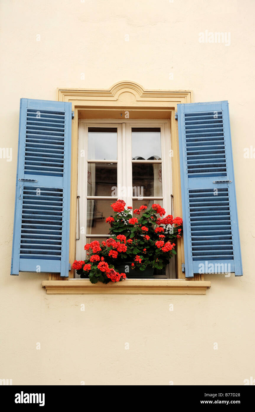 Blooming Geraniums in flower box at window with blue shutters, La Colle sur Loup, Alpes-Maritimes, Provence-Alpes - Stock Image