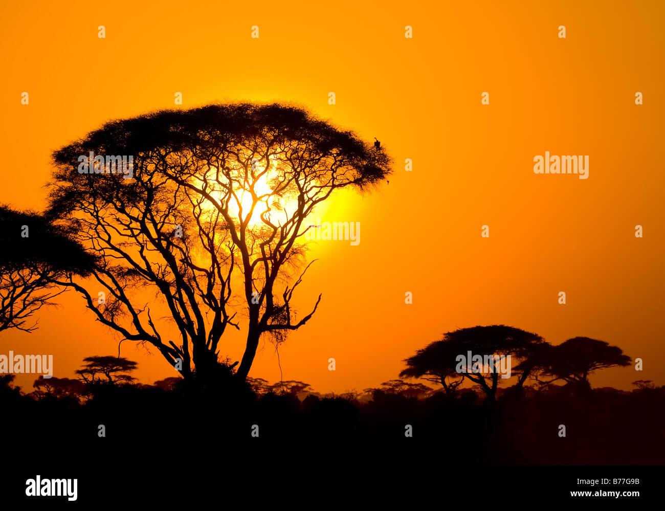 african sunset in savannah kenya - Stock Image