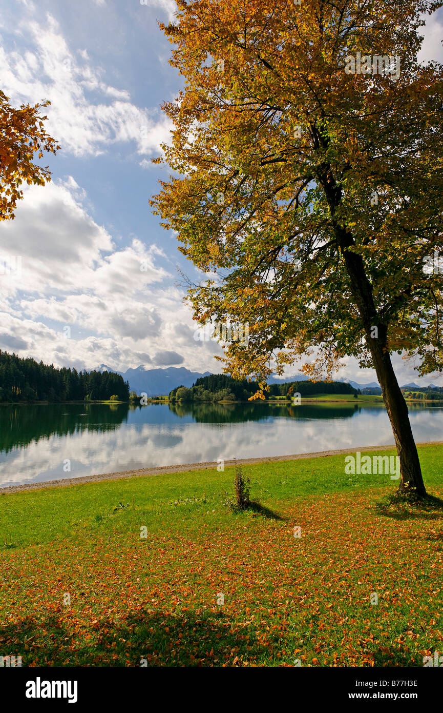 View across the Forggensee lake towards the Thannheim mountains, Bavarian Swabia, Bavaria, Germany Europe Stock Photo