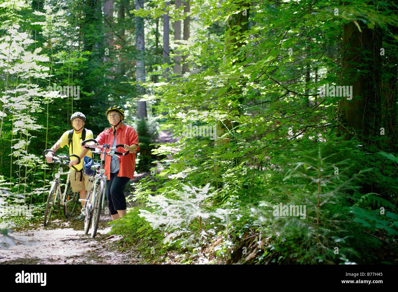 Cyclists in the wildlife park, Paterzeller Eibenwald, yew tree forest near Wessobrunn, Upper Bavaria, Bavaria, Germany, - Stock Image