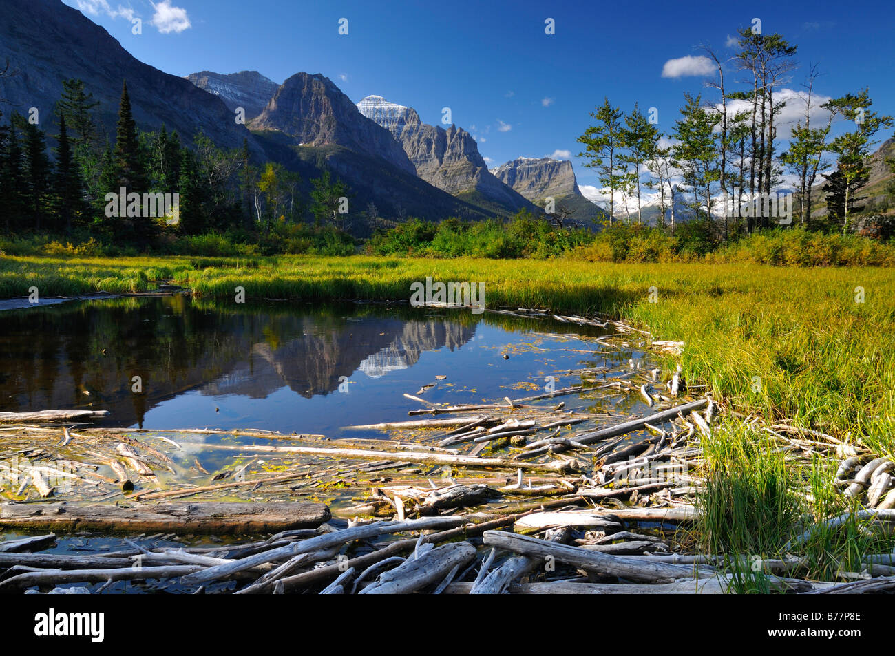Driftwood on Lake Saint Mary, Glacier National Park, Montana, USA, North America Stock Photo