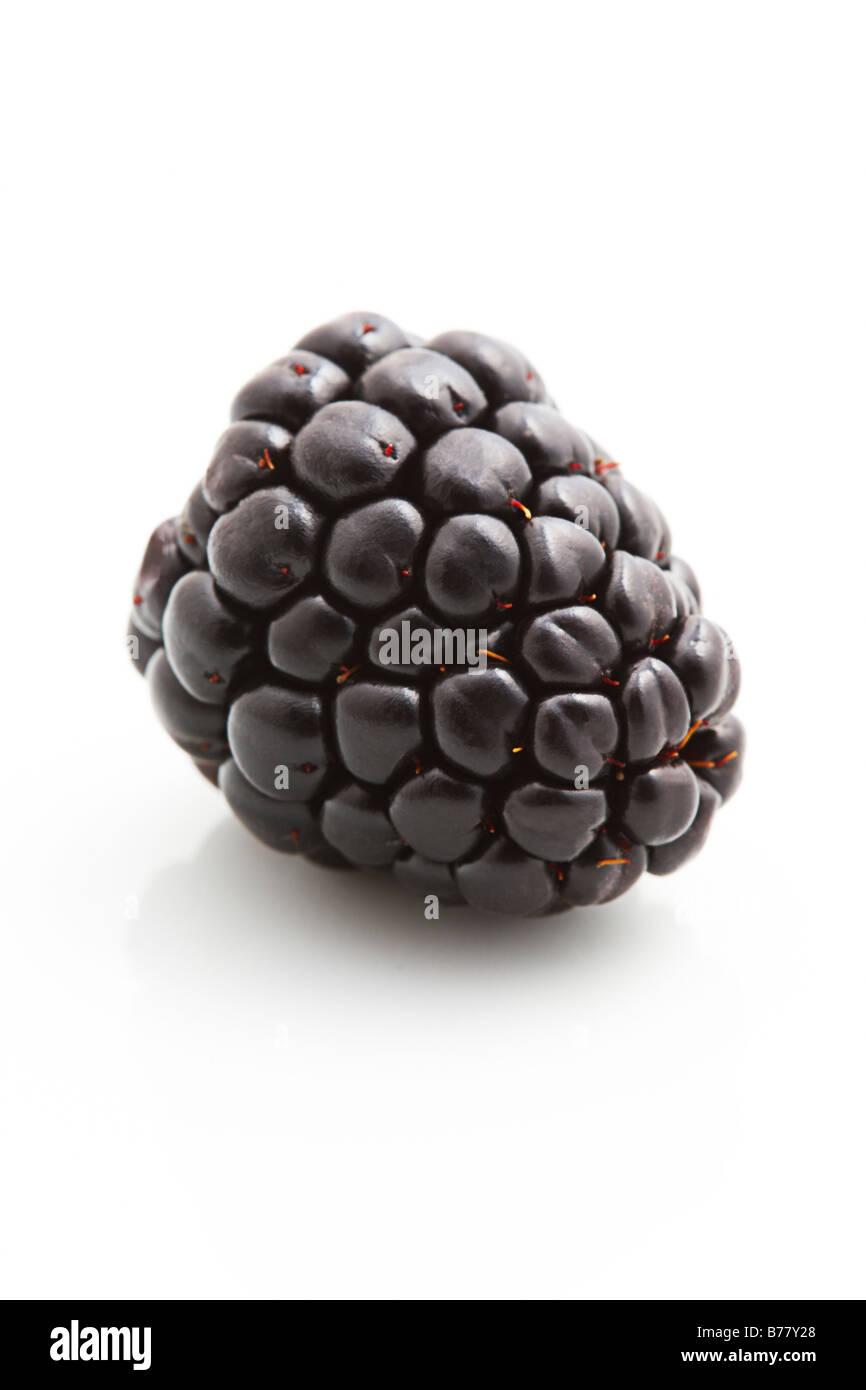 Single Blackberry on a white background Stock Photo