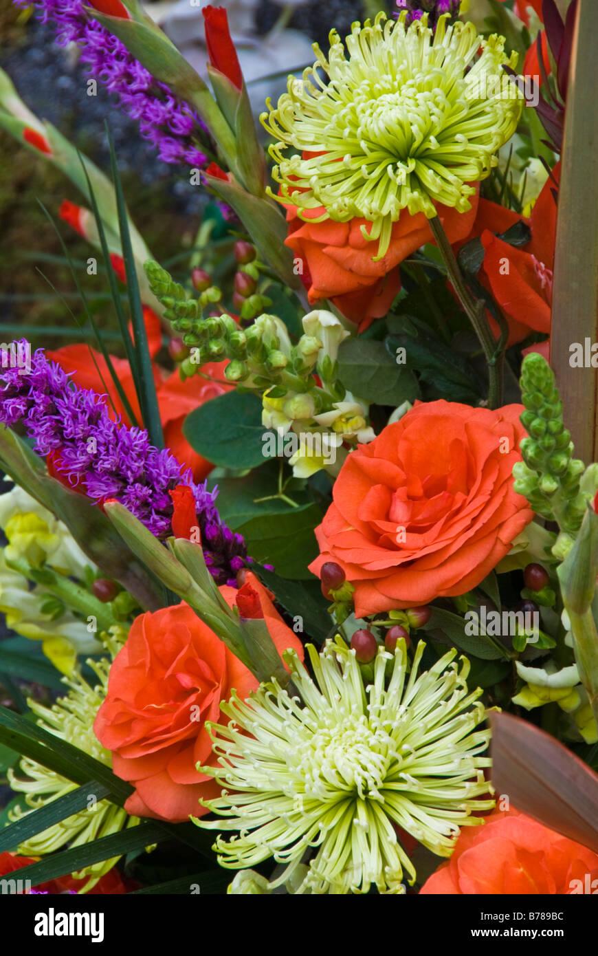 Purple Orange Rose perennial shrub genus Rosa Rosaceae close up roses Spider mum flowers Love, Gladiolus Beauty, - Stock Image
