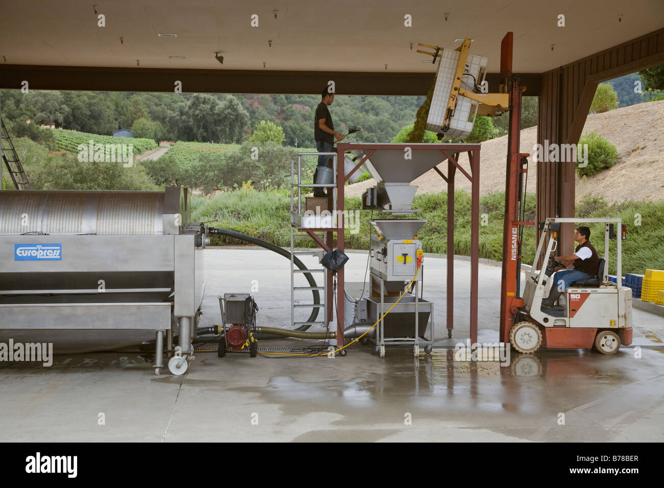 CHARDONNAY grapes are dumped into a CRUSHER and they pumped into a WINE PRESS at JOULLIAN VINEYARDS CARMEL VALLEY - Stock Image