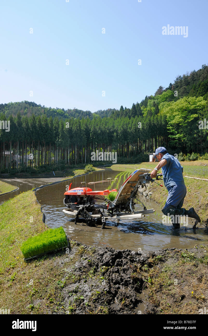 Rice farmer planting rice plants by machine into a terraced field, Ohara near Kyoto, Japan, Asia - Stock Image
