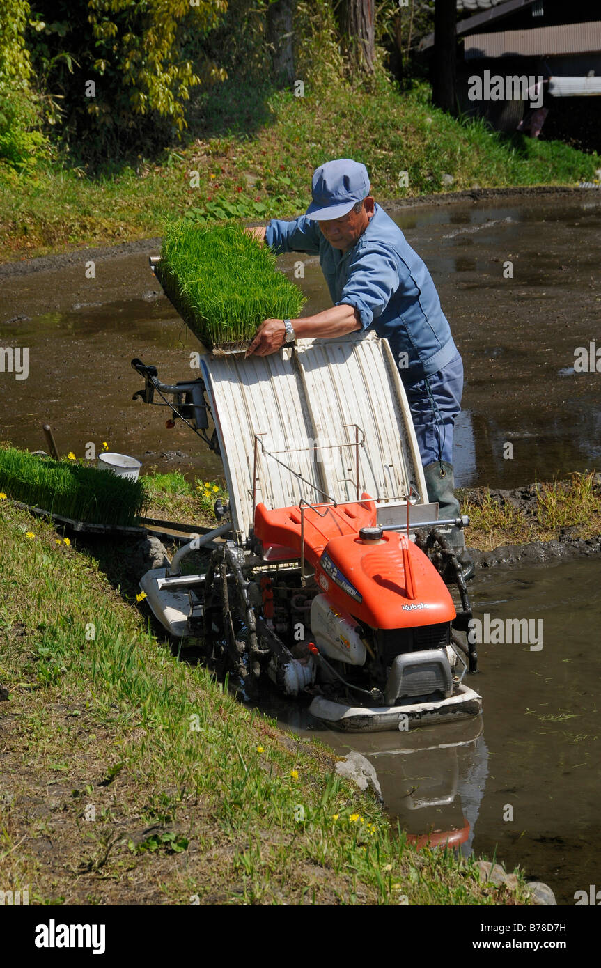 Rice farmer pushing the rice plants into the planting machine, Ohara near Kyoto, Japan, Asia - Stock Image