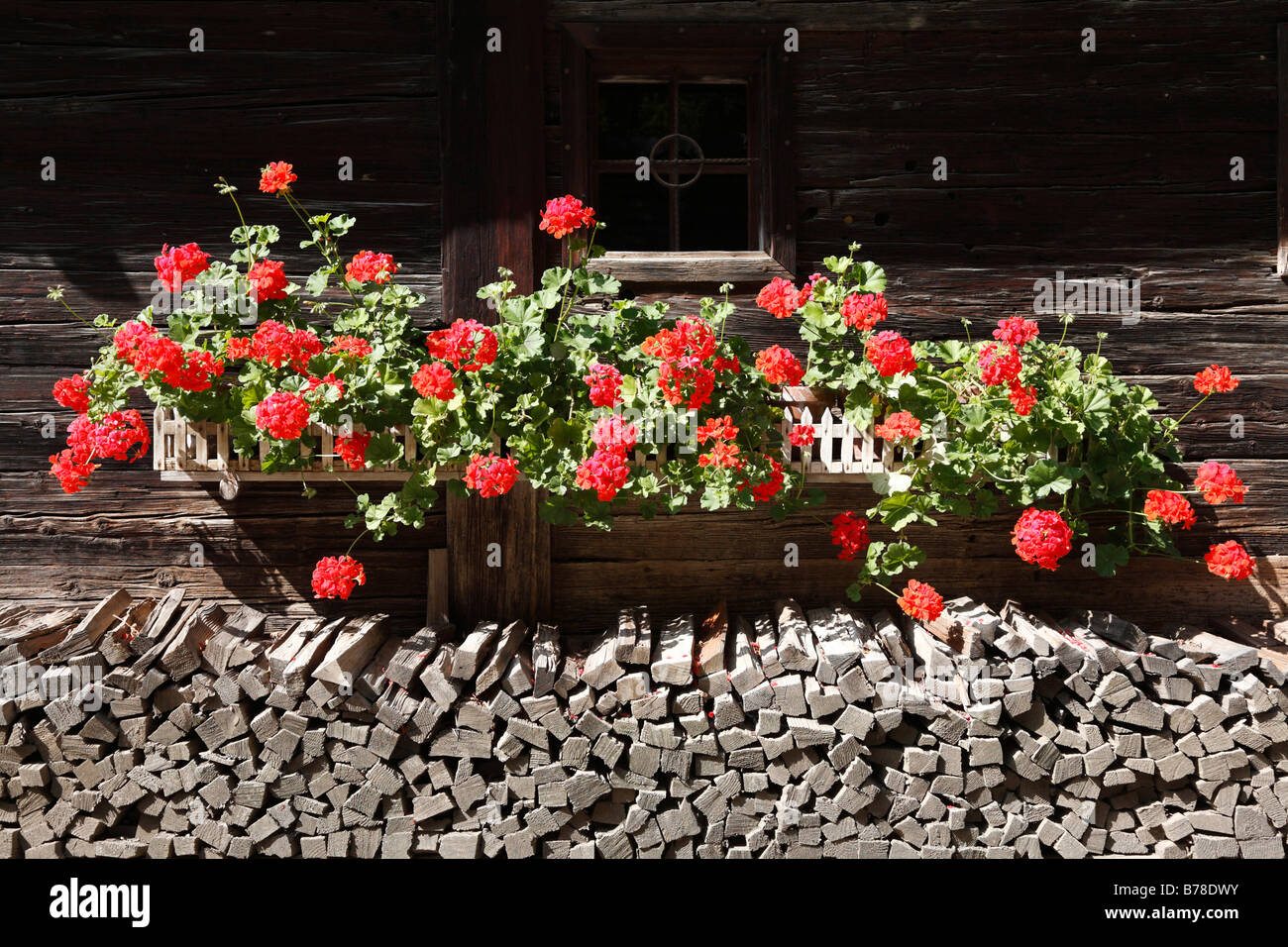 Geraniums on a wooden house, Austrian Open Air Museum Stuebing, Styria, Austria, Europe - Stock Image
