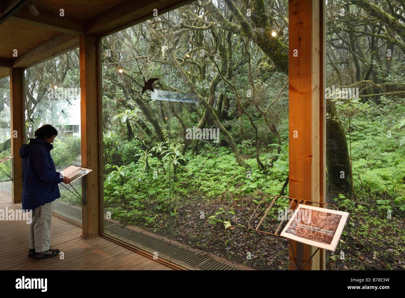 Information centre Laguna Grande in a cloud forest, Garajonay National Park, La Gomera, Canary Islands, Spain, Europe - Stock Image