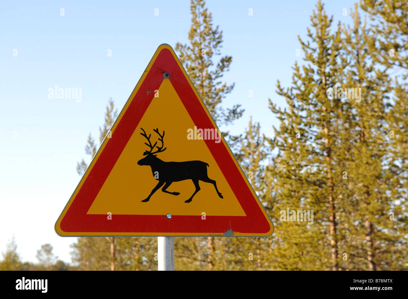 Traffic sign, attention caribous, Ivalo, Lapland, Finland, Europe - Stock Image