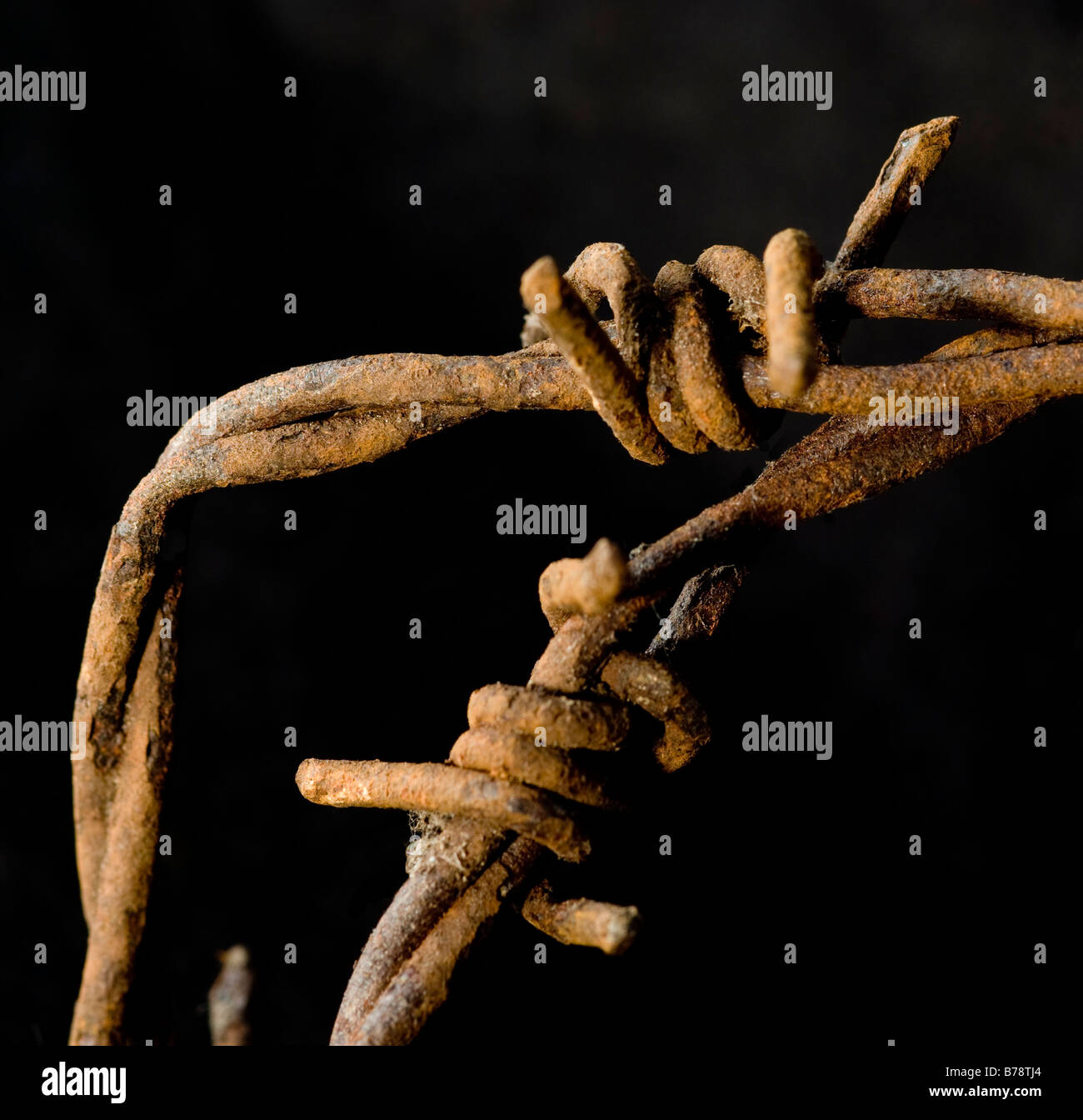 Close up of two sections of twisted, rusty barbed wire - Stock Image