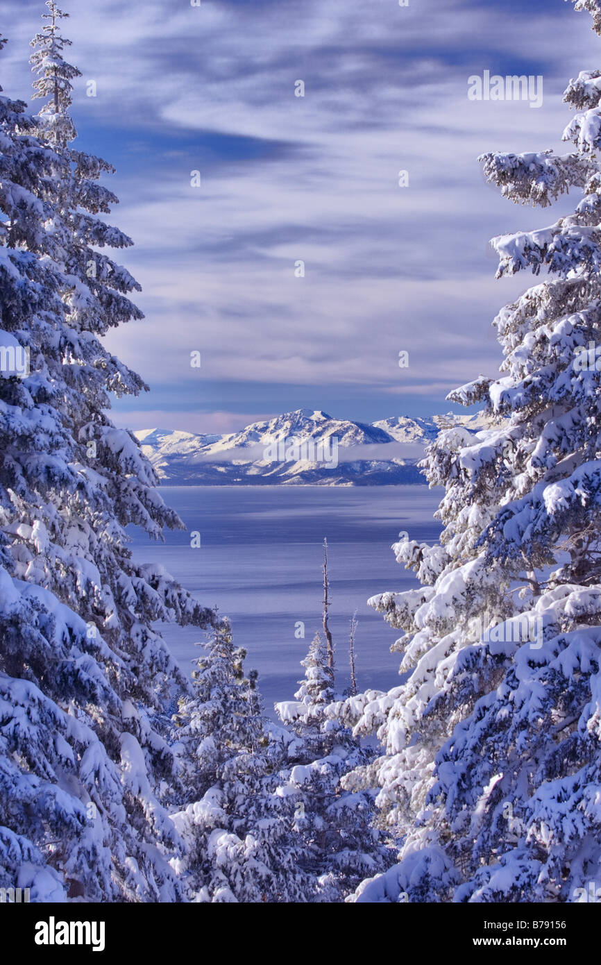 A view of Lake Tahoe California with snowy trees in the morning after a winter storm - Stock Image