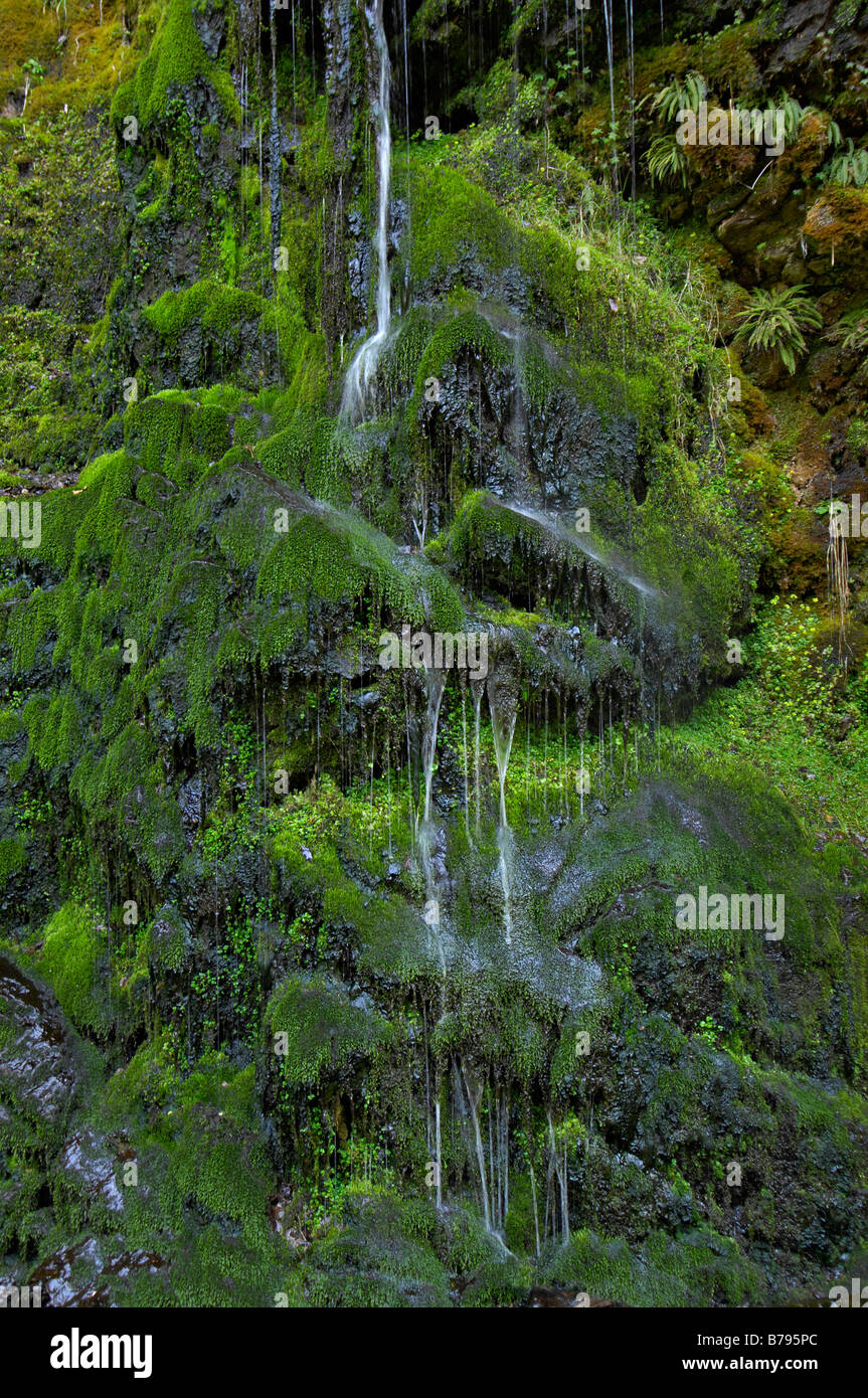 A green mossy waterfall in woods near Golspie Sutherland northern Scotland UK - Stock Image