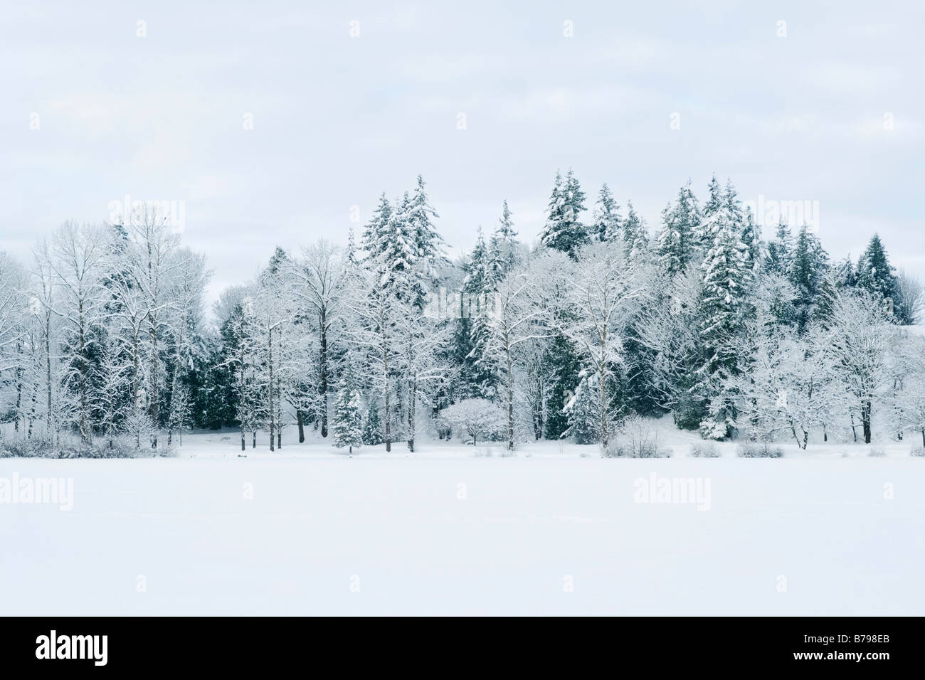 Snow covered trees line Mill Lake in Abbotsford BC Canada - Stock Image
