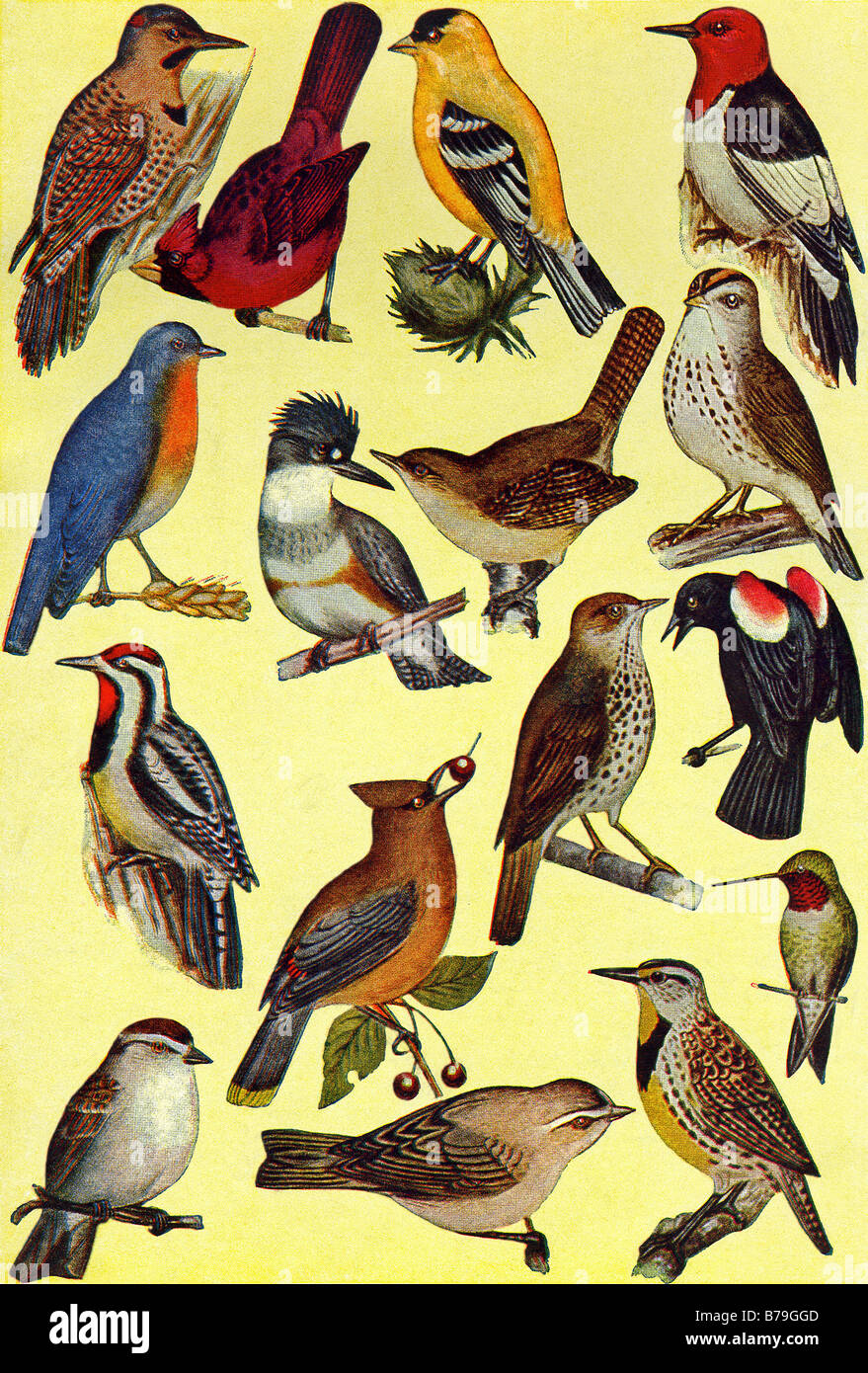 Common Birds - Stock Image