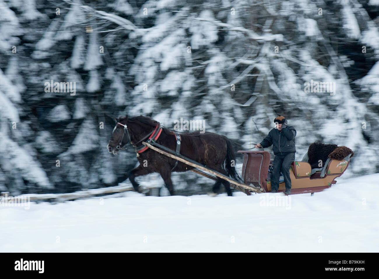 Horse drawn sleigh on Gubalowka Hill Zakopane Tatra Mountains Podhale Region Poland - Stock Image