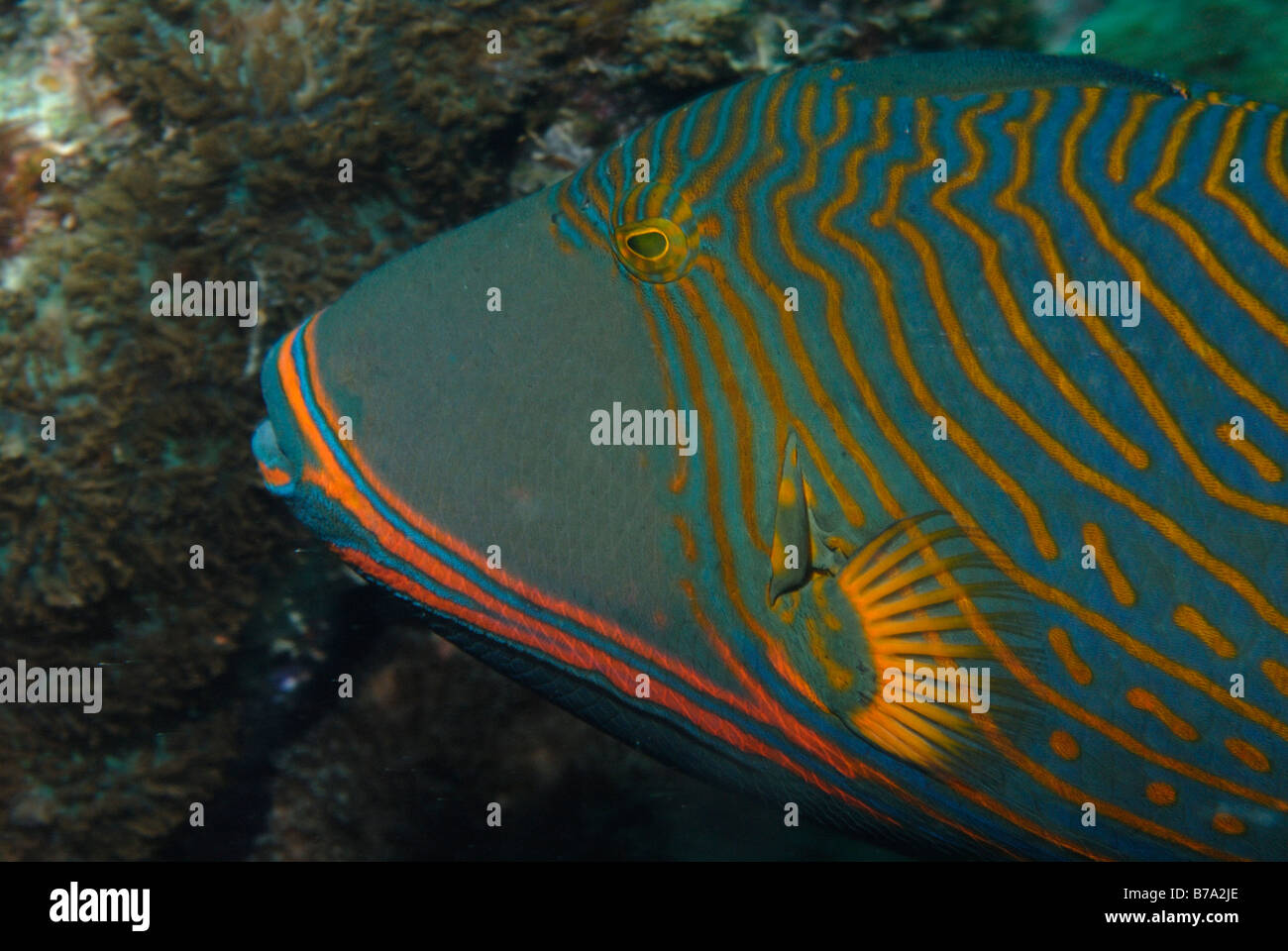 Fish Seychelles Mahe Indian Ocean