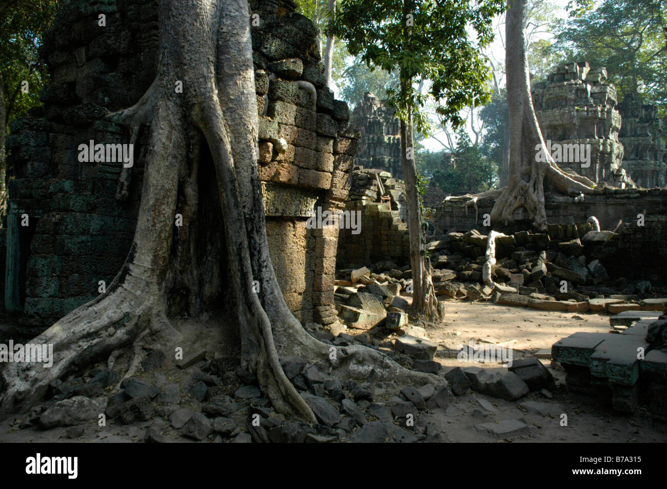 Mystic temple in the jungle overgrown by big roots and trees, Ta Prohm Temple, Angkor, Siem Reap, Cambodia, Southeast Stock Photo