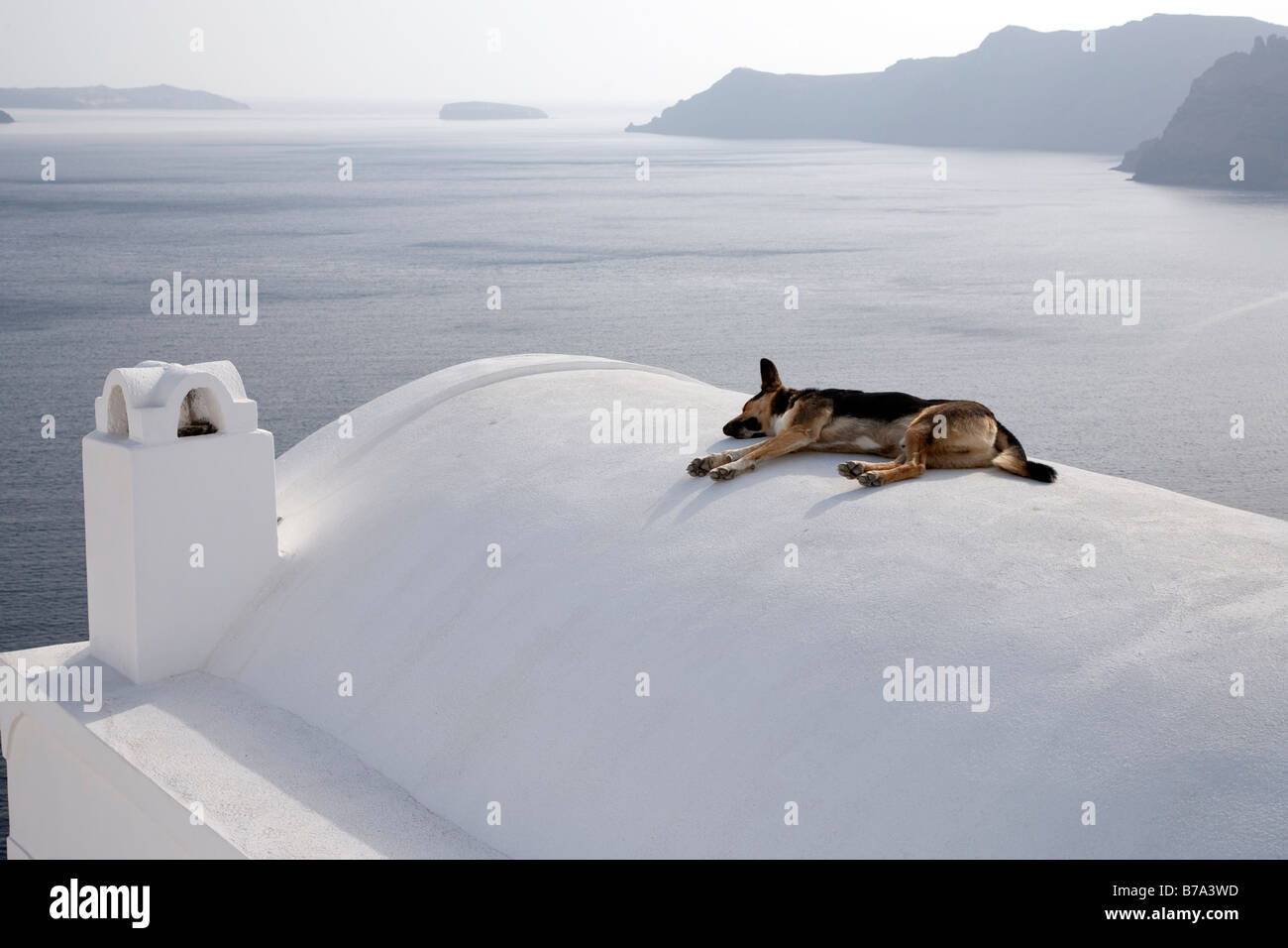 Sleeping dog on roof Oia Santorini Cyclades Greece - Stock Image