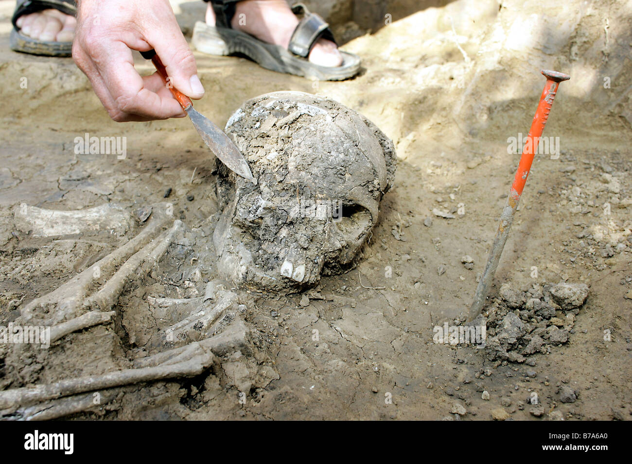 Archaeologist Ludwig Kreiner excavating a 7200 to 7300-year-old female skeleton of the Linear Pottery Culture, Aufhausen, - Stock Image