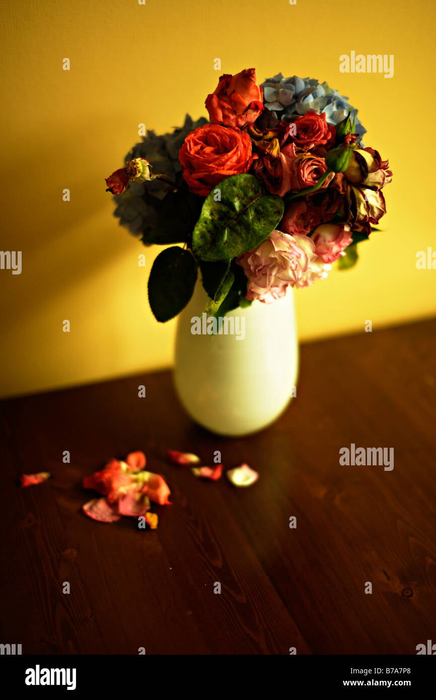 Vase of old dying flowers roses and hydrangea - Stock Image